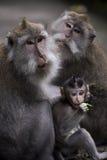 EINE AFFE-FAMILIE Lizenzfreie Stockfotografie