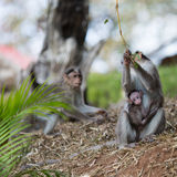 Eine Affefamilie Lizenzfreie Stockfotos
