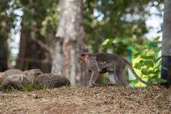 Eine Affefamilie Stockbild
