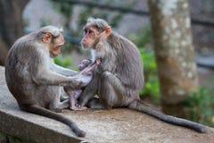 Eine Affefamilie Stockfotos