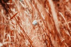 Eine alleine Schnecke, die an einem Grashalm hängt Stockfotos