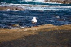 Eine alleine Seemöwe Stockfoto
