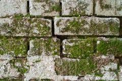 Eine alte Backsteinmauer mit Moos lizenzfreie stockfotos