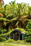 Eine alte Hütte im Palmenwald Stockfotos