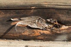 Eine alte Holzoberfläche mit Knoten Hintergrund Beschaffenheit lizenzfreies stockfoto