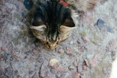 Eine alte Katze Stockfotografie