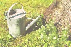 Eine alte metallische Gießkanne, die auf dem Rasen steht Lizenzfreies Stockbild