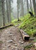 Eine alte Plattform nahe dem Weg durch den Wald Lizenzfreie Stockfotos