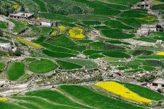 Eine alte tibetanische Regelung im Hochgebirge des Himalajas: gerundete ungleichmäßig geformte Gerstenfelder, hellgrüne Farbe und Stockfoto