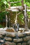 Eine alte Wasservertiefung Stockfotos