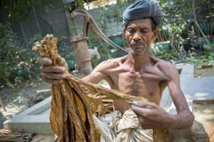 Eine alter Mann Tabakarbeitskraft, die Bündel Tabake in Dhaka, manikganj, Bangladesch verarbeitet lizenzfreie stockbilder
