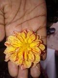 Eine andere Blume lizenzfreie stockfotos