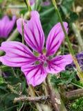 Eine andere Blume lizenzfreie stockbilder