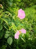 Eine andere Blume stockfoto