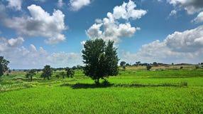 Eine angenehme Landschaft lizenzfreies stockfoto