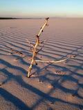 Eine Anlage in der Wüste Stockbild