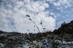 Eine Anlage, die aus Stein heraus wächst Stockfotos
