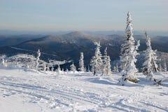 Eine Ansicht über den Winterwald und Skifahren spüren nahe zu den Bergen auf Lizenzfreie Stockbilder