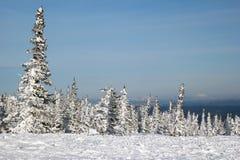 Eine Ansicht über den Winterwald und Skifahren spüren nahe zu den Bergen auf Lizenzfreie Stockfotografie