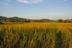 Eine Ansicht über die geernteten Lavendelfelder zu den Hügeln in der Drome-Region in Frankreich Stockfotos