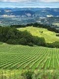 Eine Ansicht über die Hügel und die Weinberge von Sonoma County, Kalifornien lizenzfreie stockfotografie