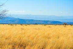 Eine Ansicht der afrikanischen Savanne lizenzfreie stockfotos