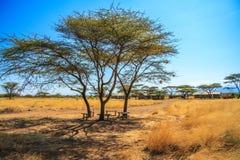 Eine Ansicht der afrikanischen Savanne lizenzfreies stockfoto