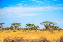 Eine Ansicht der afrikanischen Savanne lizenzfreies stockbild
