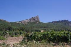 Eine Ansicht der Berge und des Weinbergs an einem Sommertag lizenzfreie stockfotos