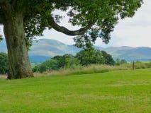 Eine Ansicht der Berge von Mourne in der Grafschaft unten in Nordirland von Castlewellan Forest Park Lizenzfreie Stockfotos