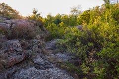 Eine Ansicht der Flusssteine umgeben durch einen dichten Wald in den Strahlen des Sonnenaufgangs Stockfotografie
