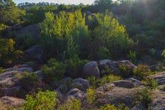 Eine Ansicht der Flusssteine umgeben durch einen dichten Wald in den Strahlen des Sonnenaufgangs Lizenzfreie Stockbilder