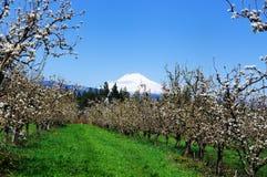 Eine Ansicht der Obstgärten im Haubenfluß Stockfoto