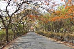 Eine Ansicht der Straße mit gulmohar Baumüberdachung während des Sommers, Pune, Indien lizenzfreie stockfotos
