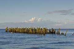 Eine Ansicht des alten Wellenbrechers in Riga-Bucht, Jurmala, Lettland lizenzfreie stockbilder