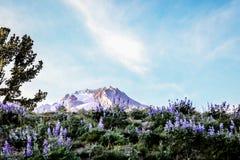 Eine Ansicht des Berges stockbild