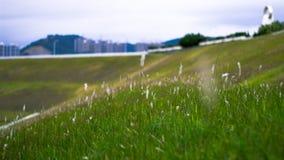 Eine Ansicht des Donghu Parks Lizenzfreie Stockfotografie