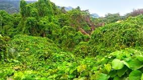 Eine Ansicht des grünen Regenwaldes und der Berge im seychel lizenzfreie stockbilder