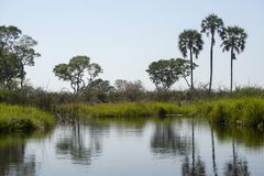 Eine Ansicht des Okavanga-Deltas - Botswana - Afrika stockfotografie