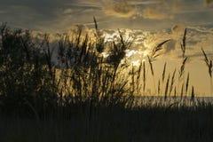 Eine Ansicht des sandigen Strandes in Jurmala bei Sonnenuntergang, Lettland lizenzfreie stockfotos