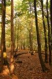 Eine Ansicht, die durch einen Wald schaut Lizenzfreies Stockbild