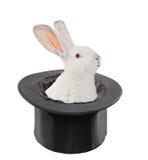 Eine Ansicht eines Kaninchens in einem Spitzenhut stockbilder