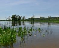 Eine Ansicht eines ruhigen Einlasses von einem schilfigen Ufer Lizenzfreies Stockfoto