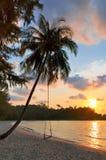 Eine Ansicht eines Strandes mit Palmen und des Schwingens bei Sonnenuntergang stockbilder