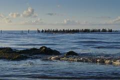 Eine Ansicht von alten Wellenbrecherposten auf Strand, Riga-Bucht, Jurmala, Lettland lizenzfreie stockbilder
