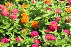 Eine Ansicht von Blumen Lizenzfreies Stockbild