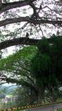 Eine Ansicht von der Spitze, Affe im Baum, menschliche Rasse beobachtend Lizenzfreies Stockfoto