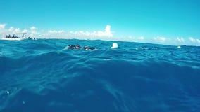Eine Ansicht von einem Sporttaucher auf der Oberfläche des Ozeans stock video