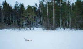 Eine Ansicht von einem weißen gefrorenen See stockbilder