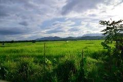 Eine Ansicht von Reisfeldern Stockbilder